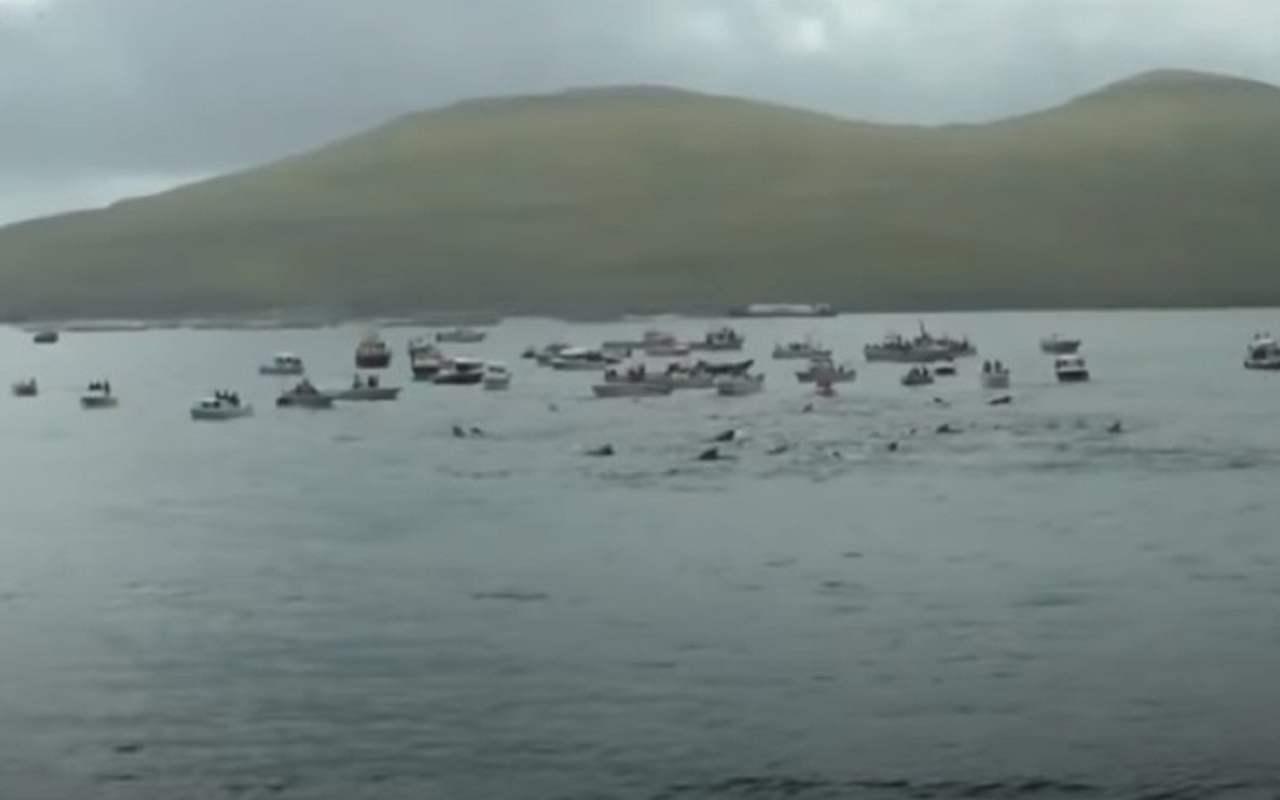 Mattanza delfini