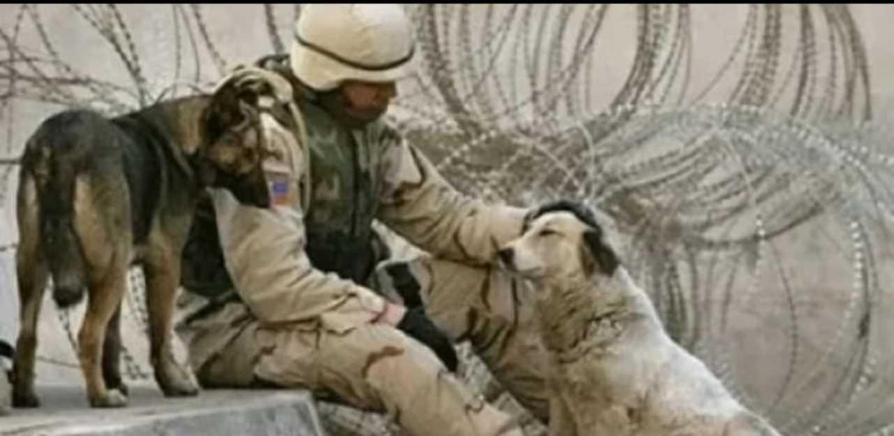 Cani Militari